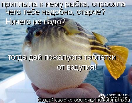 Котоматрица: приплыла к нему рыбка, спросила чего тебе надобно, старче? Ничего не надо? тогда дай пожалуста таблетки от вздутия!