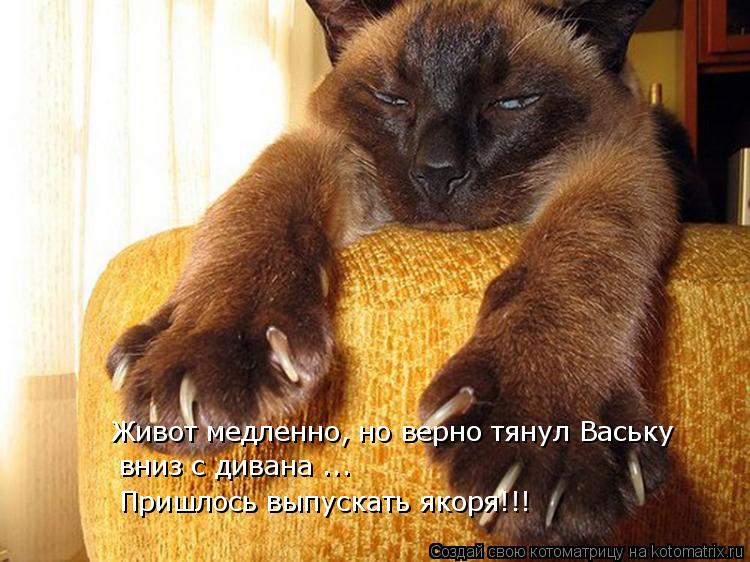 Живот медленно, но верно тянул Ваську  вниз с дивана ... Пришлось выпу