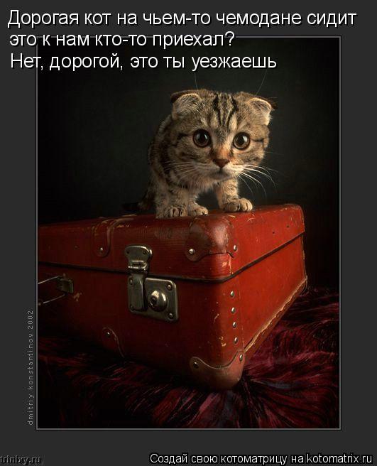 Котоматрица: Дорогая кот на чьем-то чемодане сидит  это к нам кто-то приехал?  Нет, дорогой, это ты уезжаешь