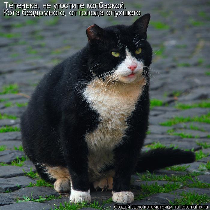 Котоматрица: Тётенька, не угостите колбаской. Кота бездомного, от голода опухшего.