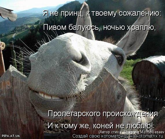 Котоматрица: Я не принц, к твоему сожалению:  Пивом балуюсь, ночью храплю,  Пролетарского происхождения  И к тому же, коней не люблю!   (Автор стиха: Shagrath Mc`K