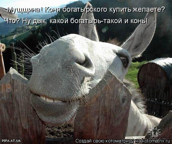 Котоматрица: Мущщина! Коня богатырского купить желаете? Что? Ну дык, какой богатырь-такой и конь!