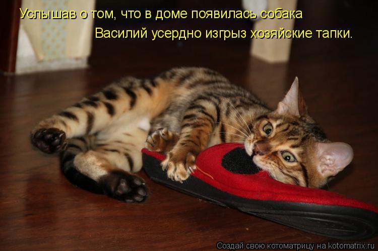 Услышав о том, что в доме появилась собака Василий усердно изгрыз хозя