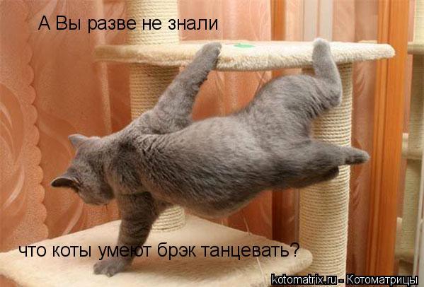 Котоматрица: А Вы разве не знали что коты умеют брэк танцевать?
