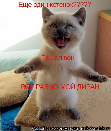 Котоматрица: Еще один котенок????? Пошел вон ВСЕ РАВНО МОЙ ДИВАН