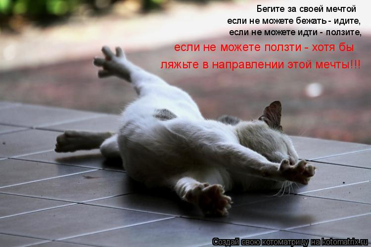 http://kotomatrix.ru/images/lolz/2011/03/30/870067.jpg