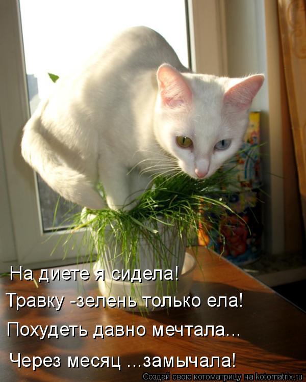 На диете я сидела! Травку -зелень только ела! Похудеть давно мечтала..