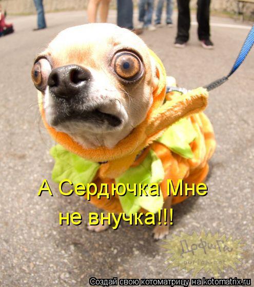 Котоматрица: А Сердючка Мне не внучка!!!