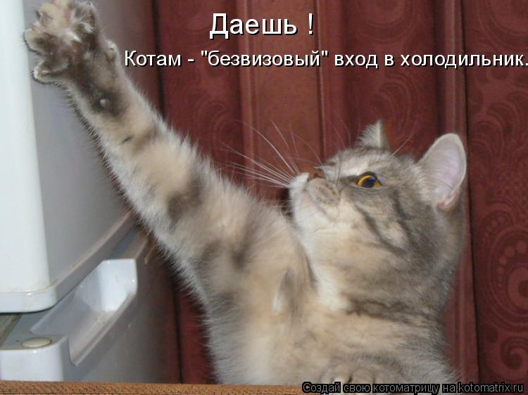 """Котоматрица: Даешь ! Котам - """"безвизовый"""" вход в холодильник."""