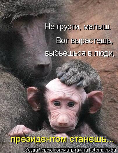 Котоматрица: президентом станешь... выбьешься в люди, Вот вырастешь, Не грусти, малыш.