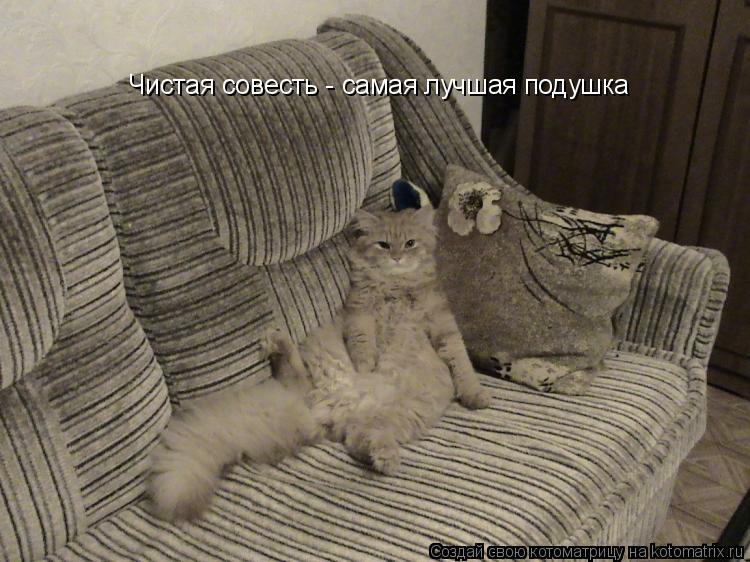 Котоматрица: Чистая совесть - самая лучшая подушка