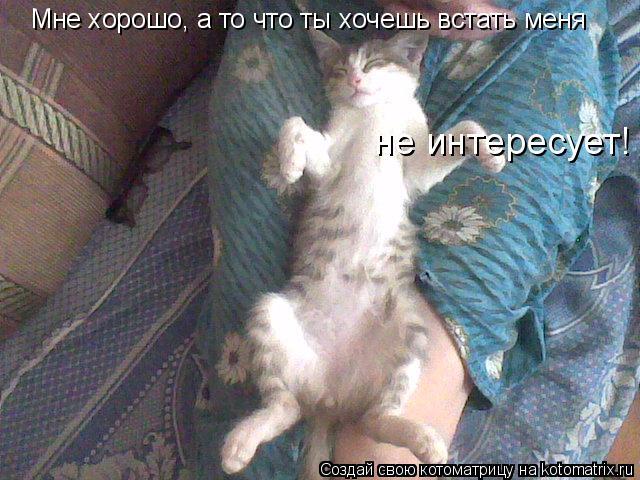 Котоматрица: Мне хорошо, а то что ты хочешь встать меня   не интересует!
