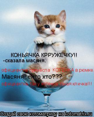 Котоматрица: КОНЬЯЧКА КРРУЖЕЧКУ!! -сказала масяня. официантка принесла  КОТЕНКА в рюмке. Масяня- енто хто??? официантка-так у котенка такая кличка!!!