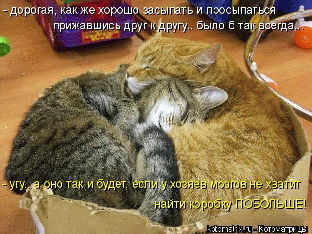 Котоматрица: - угу.. а оно так и будет, если у хозяев мозгов не хватит найти коробку ПОБОЛЬШЕ! - дорогая, как же хорошо засыпать и просыпаться прижавшись др