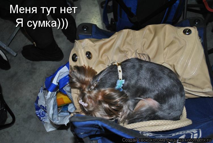 Котоматрица: Меня тут нет Я сумка)))