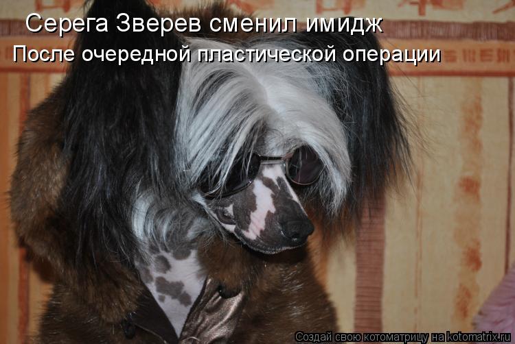 Котоматрица: Серега Зверев сменил имидж После очередной пластической операции
