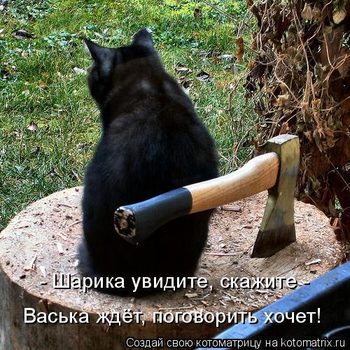 Котоматрица: - Шарика увидите, скажите -  Васька ждёт, поговорить хочет!
