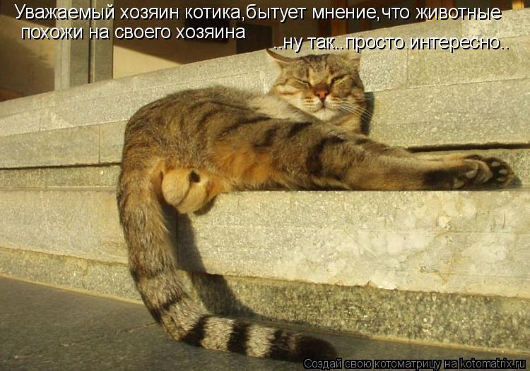 Котоматрица: Уважаемый хозяин котика,бытует мнение,что животные похожи на своего хозяина ..ну так..просто интересно..