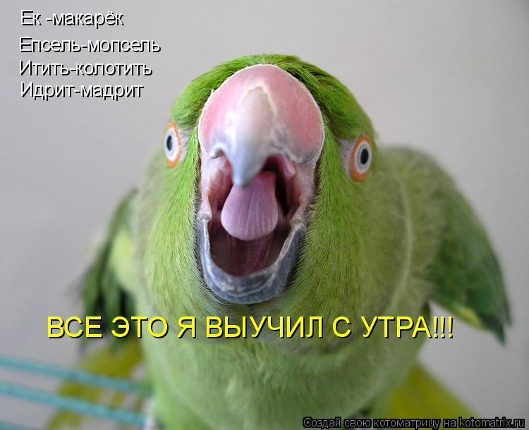 Котоматрица: Ек -макарёк Епсель-мопсель Итить-колотить Идрит-мадрит ВСЕ ЭТО Я ВЫУЧИЛ С УТРА!!!