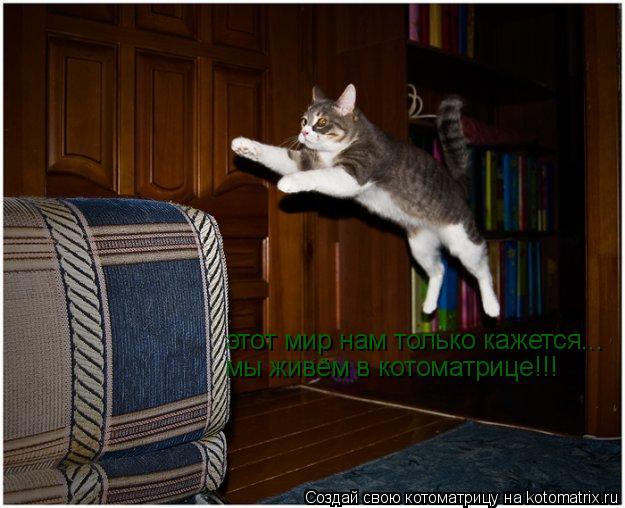 Котоматрица: этот мир нам только кажется... мы живём в котоматрице!!!
