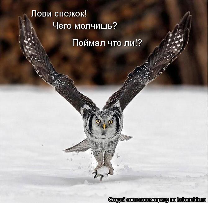 Котоматрица: Лови снежок! Чего молчишь? Поймал что ли!?