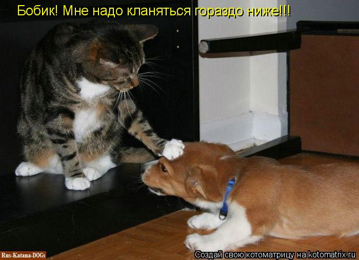 Котоматрица - Бобик! Мне надо кланяться гораздо ниже!!!