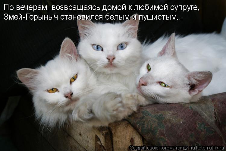 Котоматрица: По вечерам, возвращаясь домой к любимой супруге, Змей-Горыныч становился белым и пушистым...