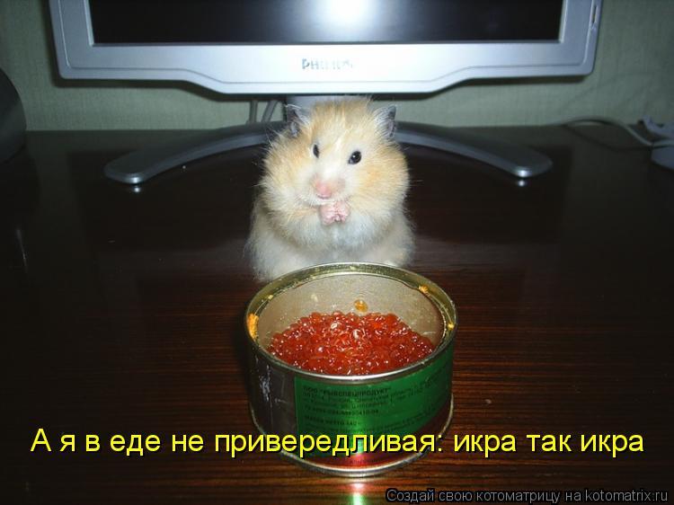 Котоматрица - А я в еде не привередливая: икра так икра