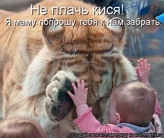 Котоматрица - Не плачь кися!  Я маму попрошу тебя к нам забрать.