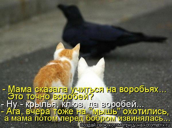 """Котоматрица: - Мама сказала учиться на воробьях... Это точно воробей? - Ну - крылья, клюв, да воробей... - Ага, вчера тоже на """"мышь"""" охотились,  а мама потом пере"""