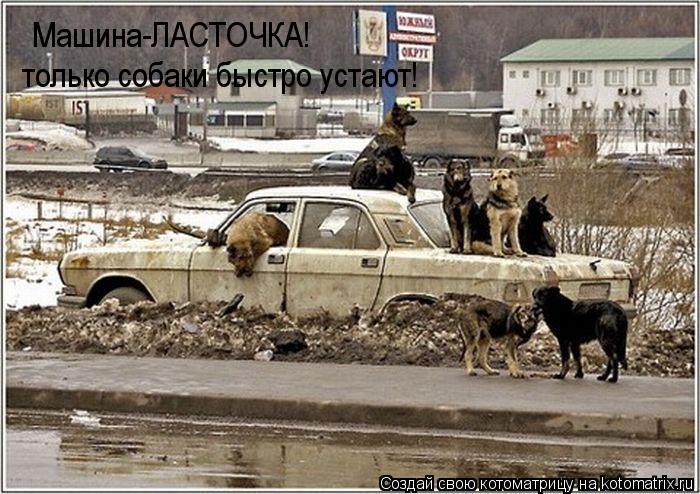 Котоматрица: Машина-ЛАСТОЧКА! только собаки быстро устают!