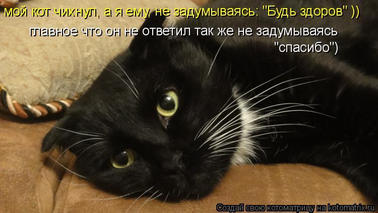 """Котоматрица: мой кот чихнул, а я ему, не задумываясь: """"Будь здоров"""" )) главное что он не ответил так же не задумываясь """"спасибо"""")"""