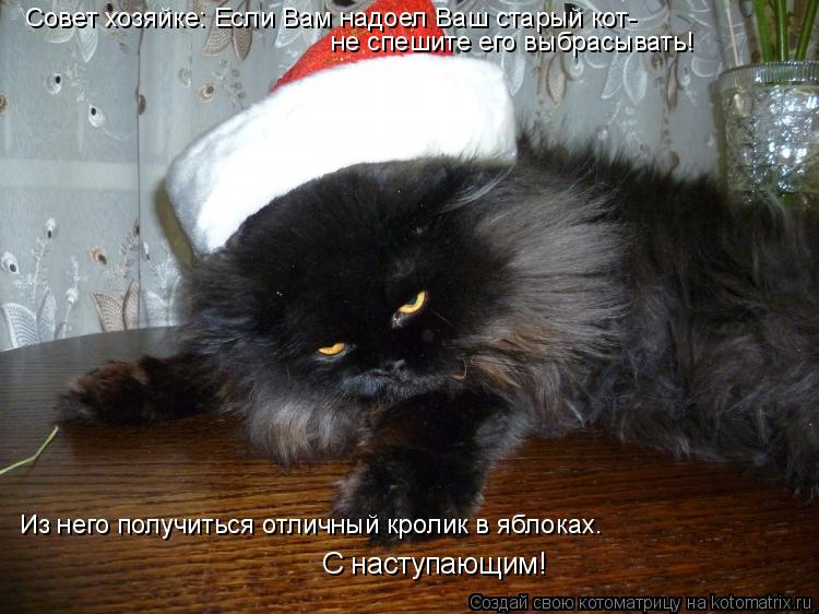 Котоматрица: Совет хозяйке: Если Вам надоел Ваш старый кот- не спешите его выбрасывать! Из него получиться отличный кролик в яблоках. С наступающим!