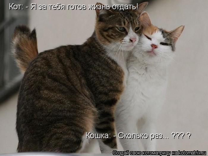 Котоматрица: Кот: - Я за тебя готов жизнь отдать! Кошка: - Сколько раз... ??? ?