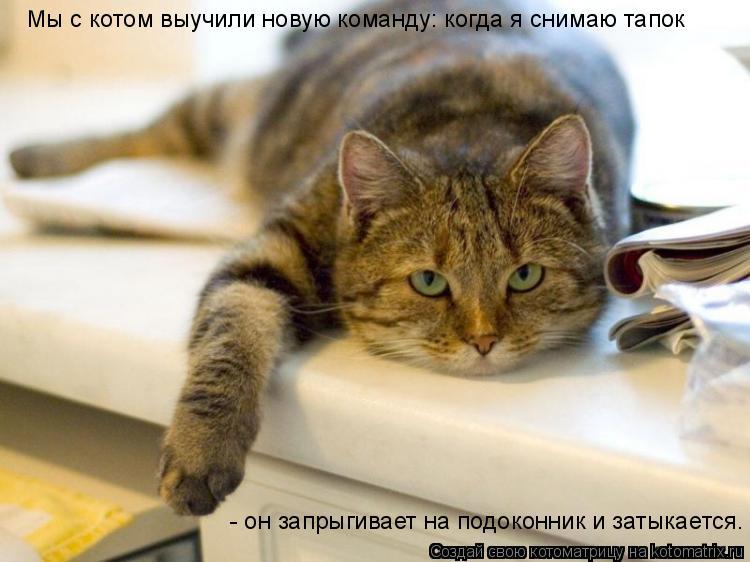 Котоматрица: Мы с котом выучили новую команду: когда я снимаю тапок - он запрыгивает на подоконник и затыкается.