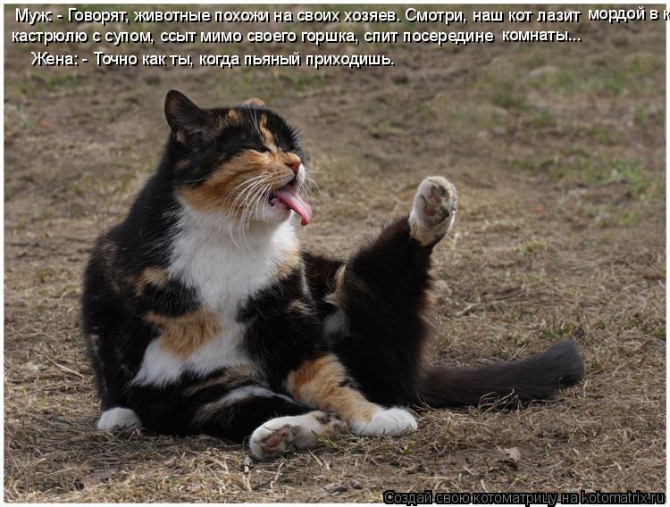 Котоматрица: Муж: - Говорят, животные похожи на своих хозяев. Смотри, наш кот лазит мордой в кастрюлю кастрюлю с супом, ссыт мимо своего горшка, спит посер