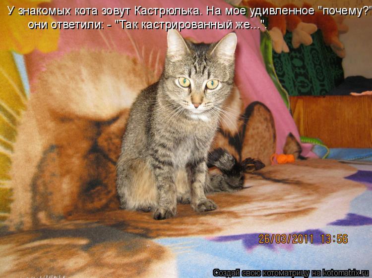 """Котоматрица: У знакомых кота зовут Кастрюлька. На мое удивленное """"почему?"""" они ответили: - """"Так кастрированный же...""""."""