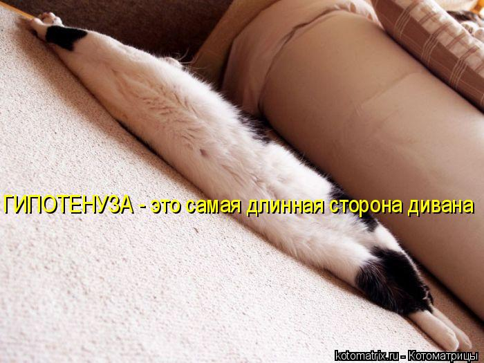 Котоматрица: ГИПОТЕНУЗА - это самая длинная сторона дивана