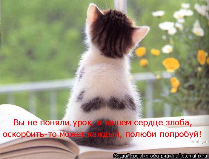Котоматрица: Вы не поняли урок, в вашем сердце злоба,  оскорбить-то может каждый, полюби попробуй!