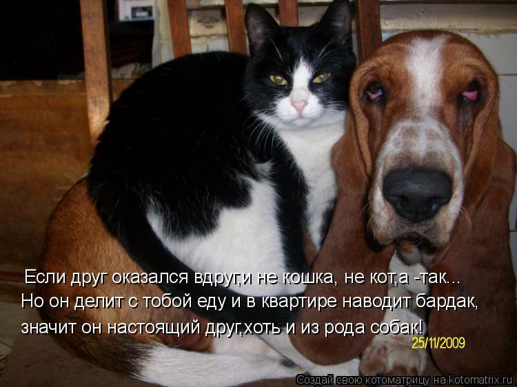 Котоматрица - Если друг оказался вдруг,и не кошка, не кот,а -так... Но он делит с то