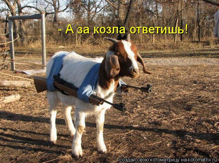 Котоматрица: - А за козла ответишь!