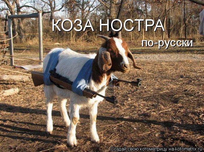 Котоматриця!)))) 875656