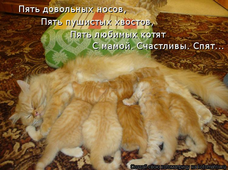С мамой. Счастливы. Спят... Пять довольных носов, Пять пушистых хвосто