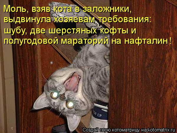 Моль, взяв кота в заложники, выдвинула хозяевам требования: шубу, две