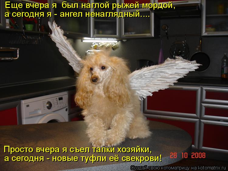 Котоматрица: Еще вчера я  был наглой рыжей мордой, а сегодня я - ангел ненаглядный.... Просто вчера я съел тапки хозяйки, а сегодня - новые туфли её свекрови!