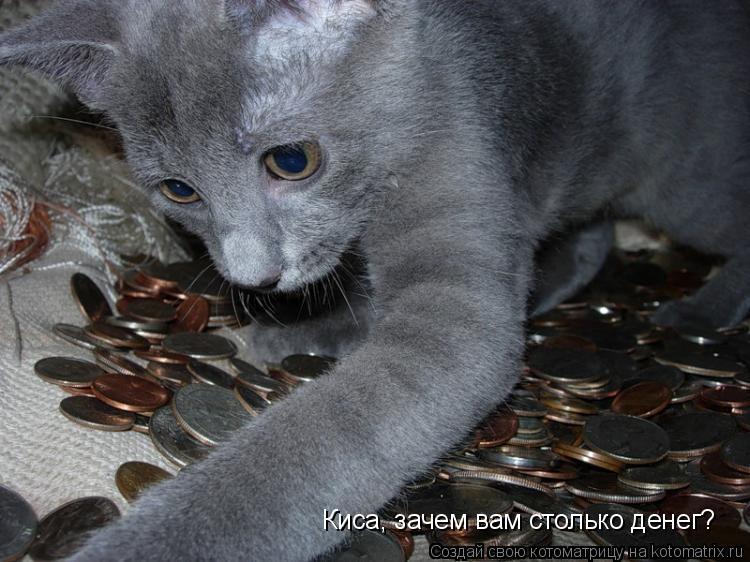 Котоматрица: Киса, зачем вам столько денег?