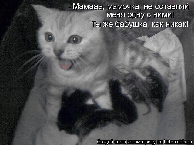 Котоматрица: Ты же бабушка, как никак! - Мамааа, мамочка, не оставляй  меня одну с ними!