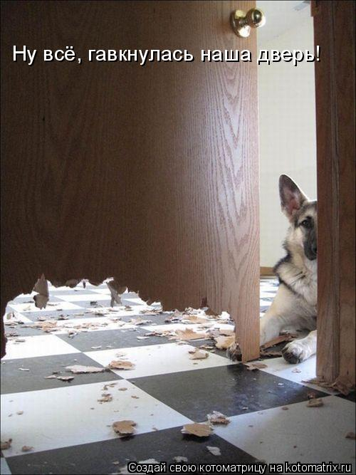 Котоматрица: Ну всё, гавкнулась наша дверь!