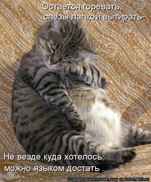 Котоматрица: Не везде,куда хотелось, слезы лапкой вытирать- Остается горевать, можно языком достать ..