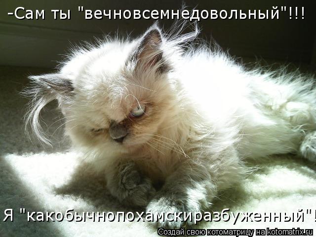 """Котоматрица: -Сам ты """"вечновсемнедовольный""""!!!  Я """"какобычнопохамскиразбуженный""""!!!"""